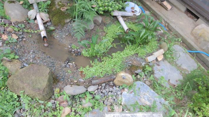 全長2メートルくらいの池