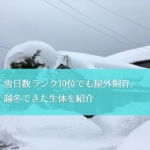 【屋外飼育】豪雪地帯の庭池で越冬できた水草と生き物を紹介