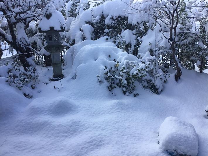 雪の降る庭