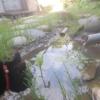 庭に池を作ってみたら、難しかったけど安くできた【まとめ】